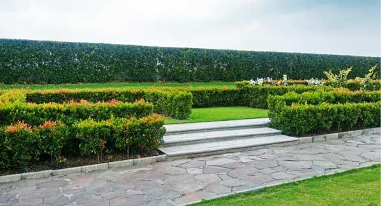 lahan makam private shrub