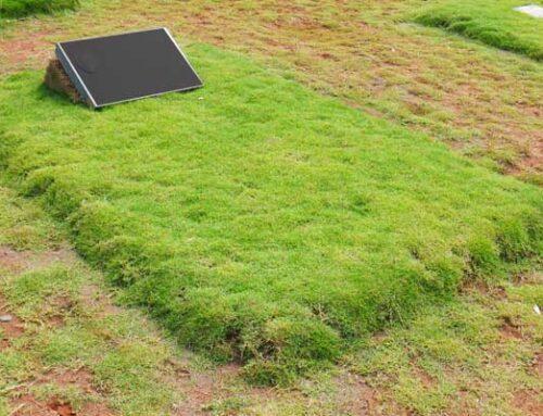 Prosedur Lengkap , Harga Serta Biaya Pemakaman Covid 19 Di San Diego Hills